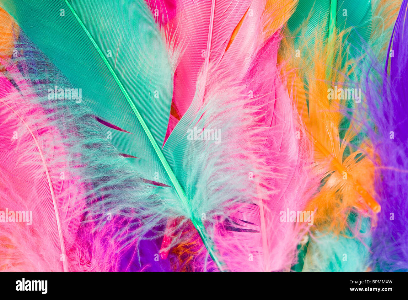 Colorful Feather close up shot - Stock Image