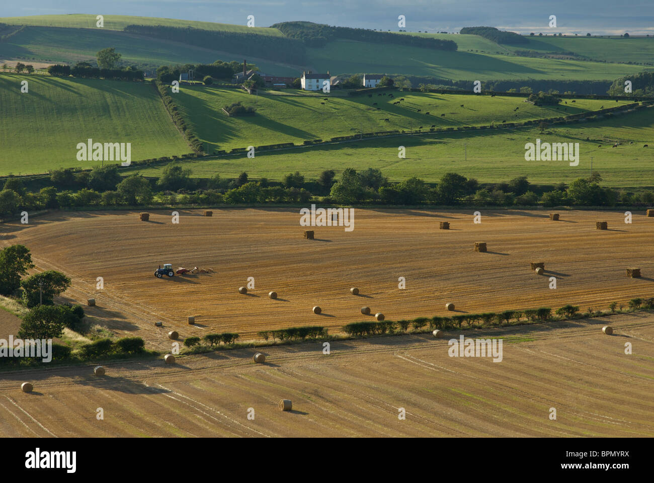 Haymaking near Kirk Yetholm, Scottish Borders, Scotland, UK Stock Photo