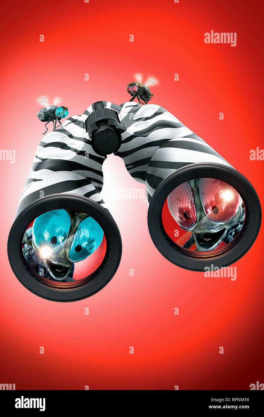 BUZZ & SCUZZ RACING STRIPES (2005) - Stock Image