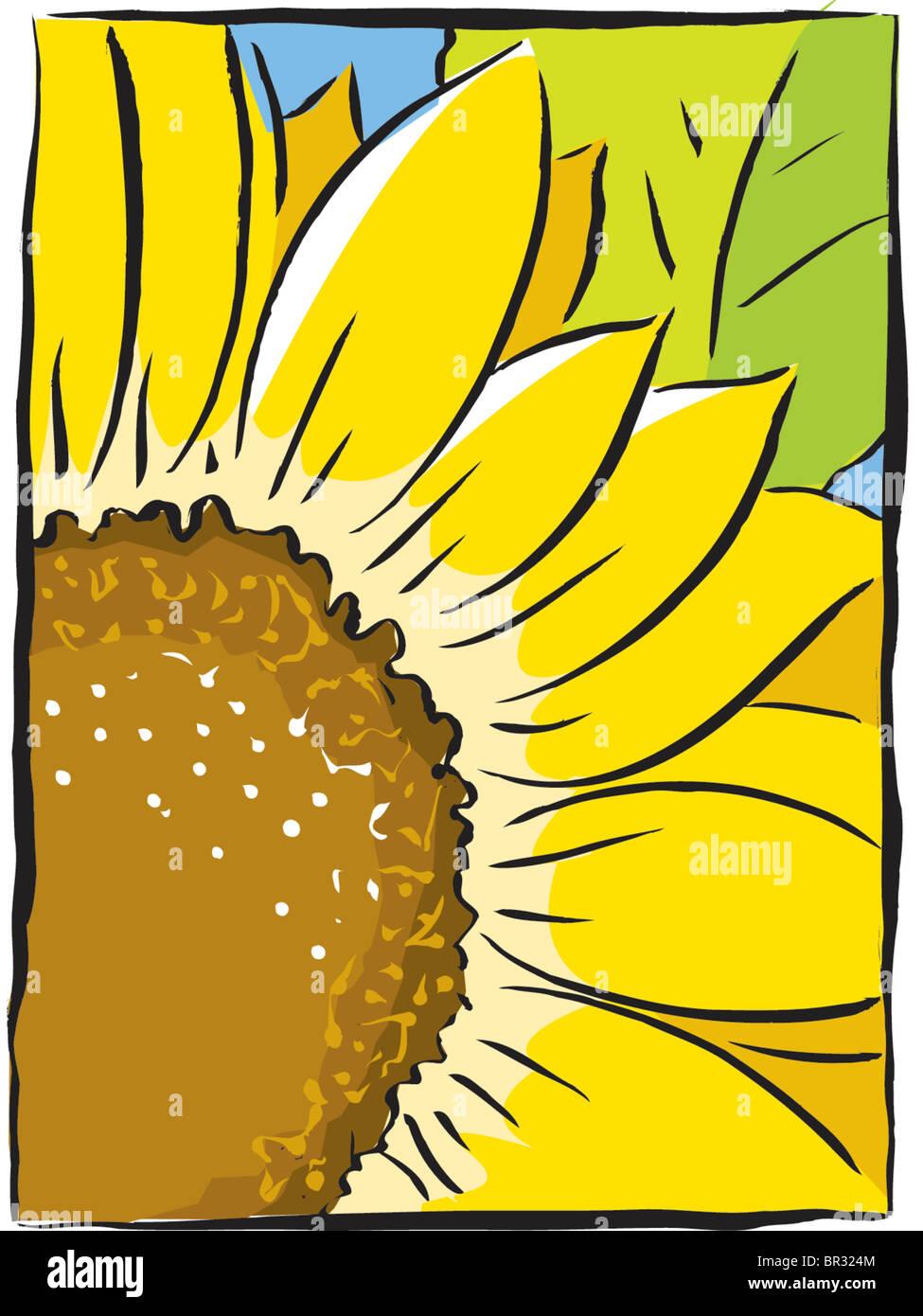 sunflower close-up - Stock Image