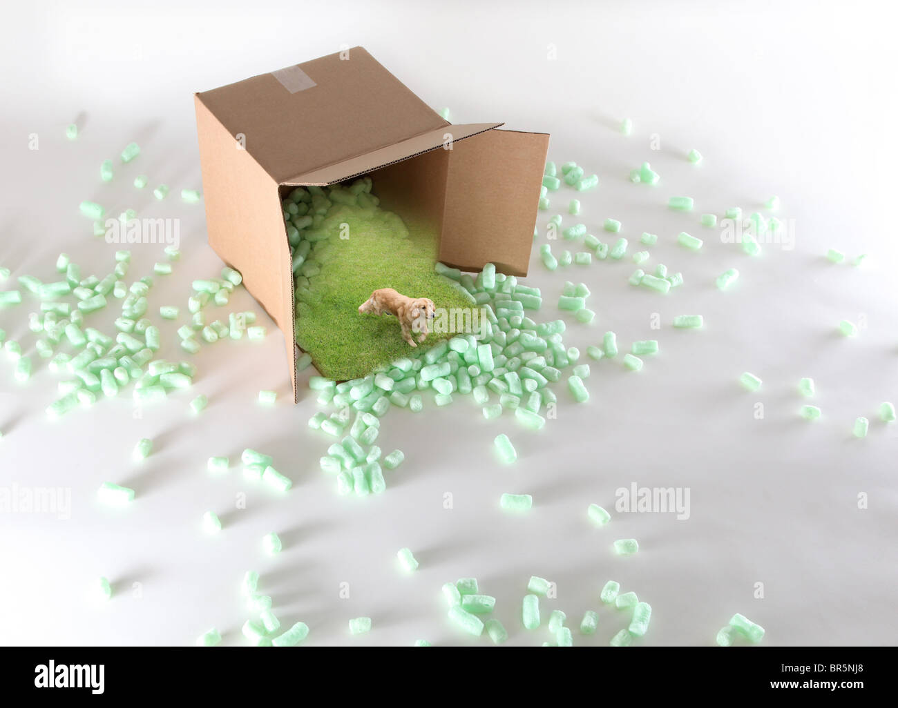 Dog runs from shipping package - Stock Image