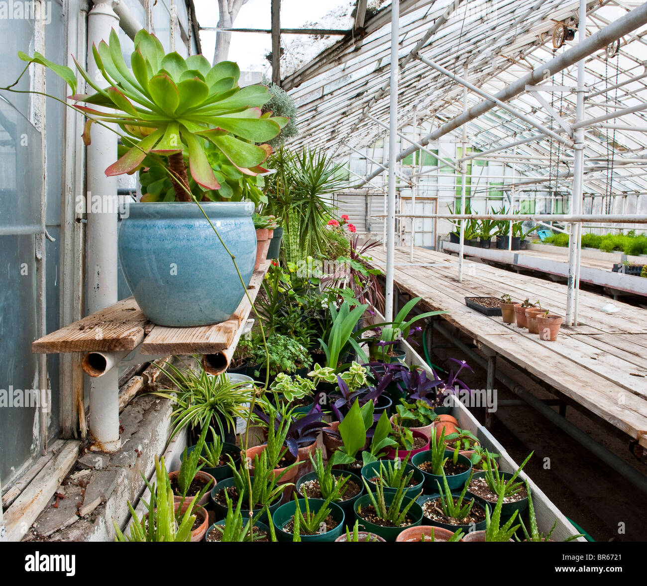 Interior view of a production greenhouse - Stock Image