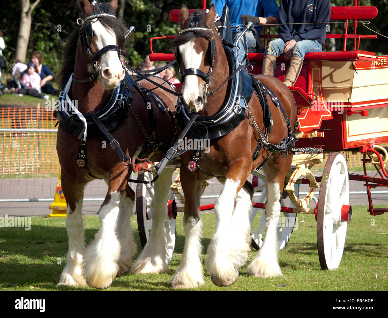 Pair of Clydesdale horses with cart Stock Photo