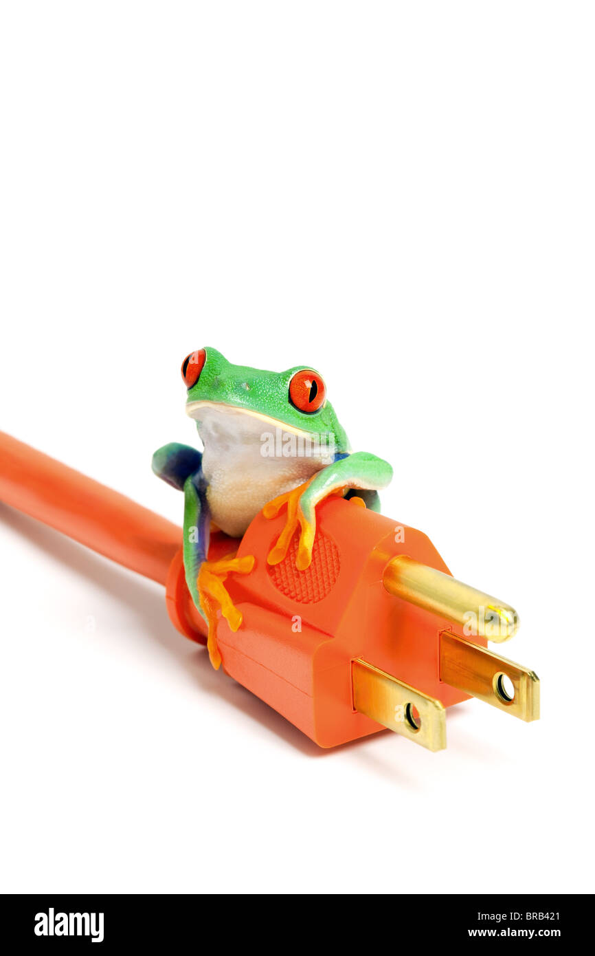 green or renewable energy / conservation concept - frog on power plug isolated on white background. - Stock Image