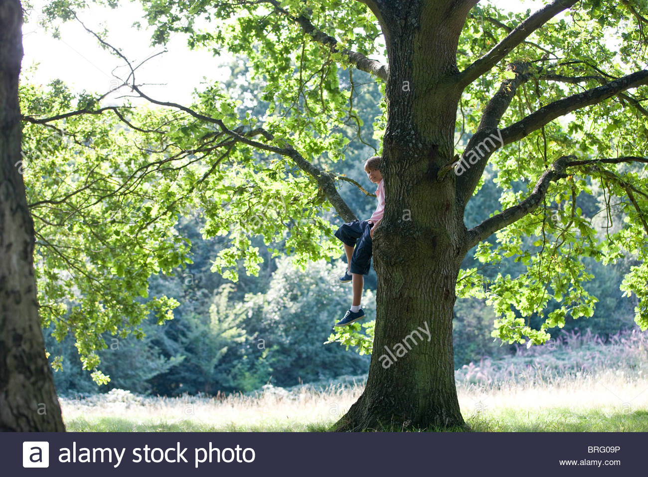 A young boy sitting in a tree - Stock Image