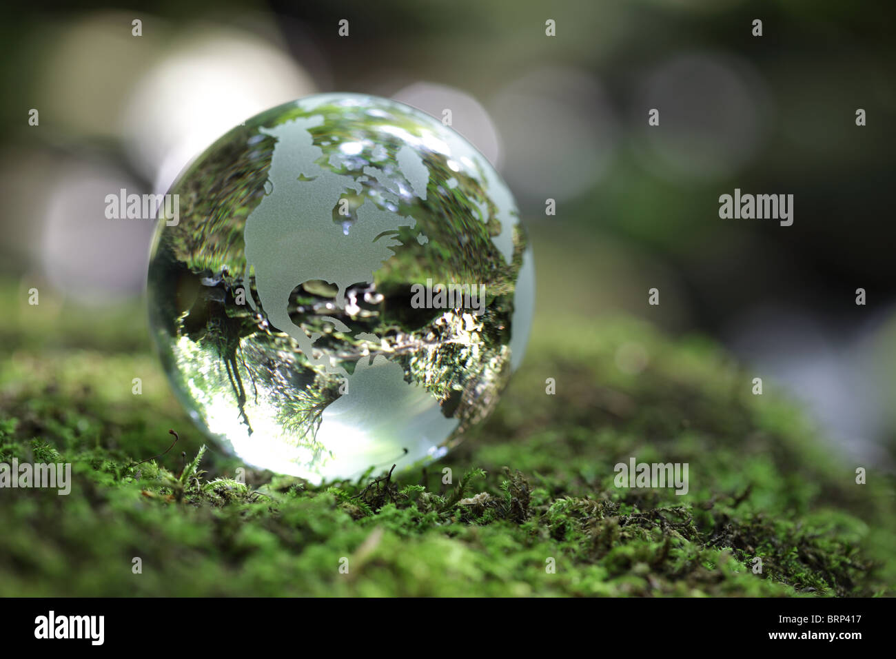 Globe in the forest - Stock Image