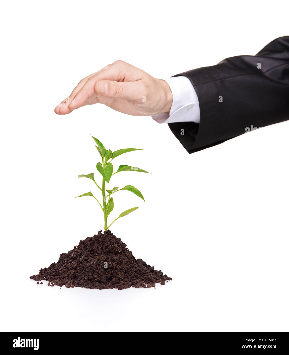 A male hand over a plant protecting it - Stock Image