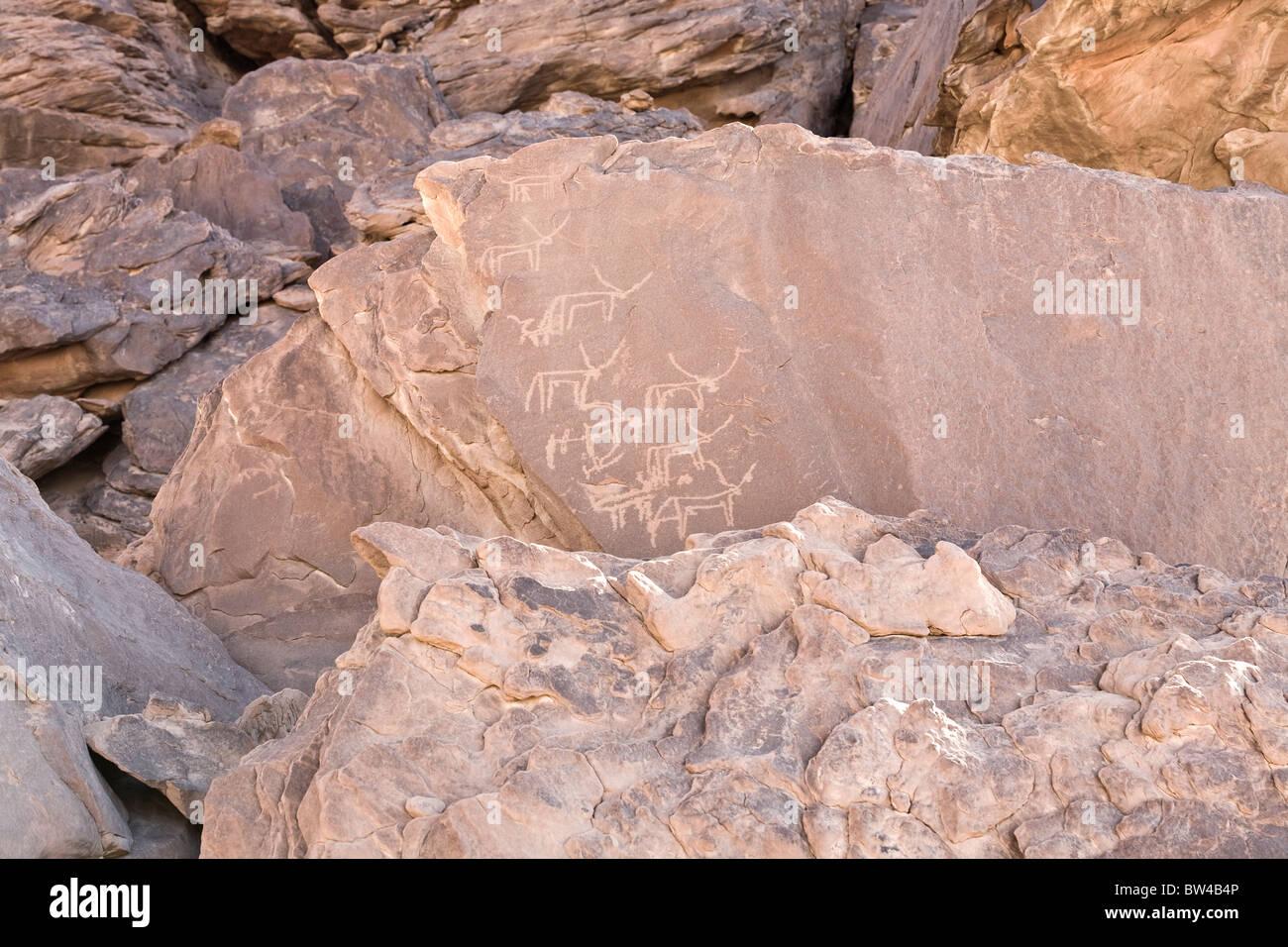 Petroglyphs of various horned animals in The Eastern Desert of Egypt - Stock Image