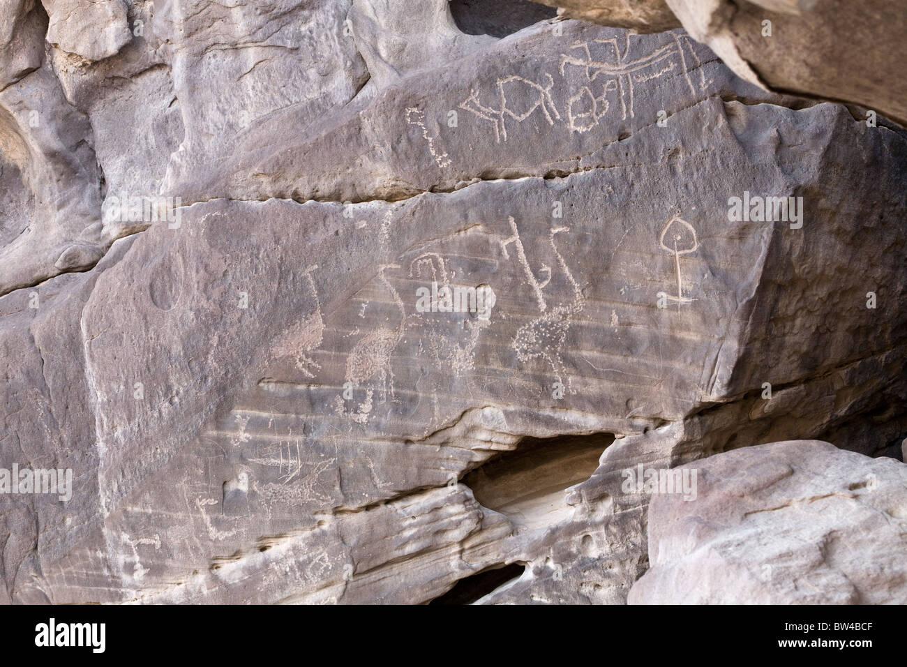 Petroglyphs of animals and Ostrich on darkened rock-face in the Eastern Desert, Egypt - Stock Image