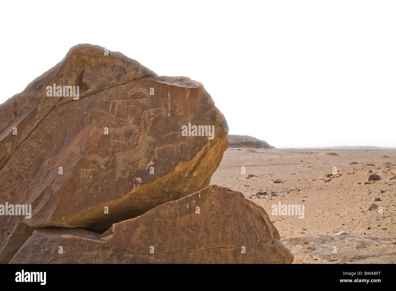 Images of animals scratched on rocks in a dry wadi bed in the Eastern Desert, Egypt - Stock Image