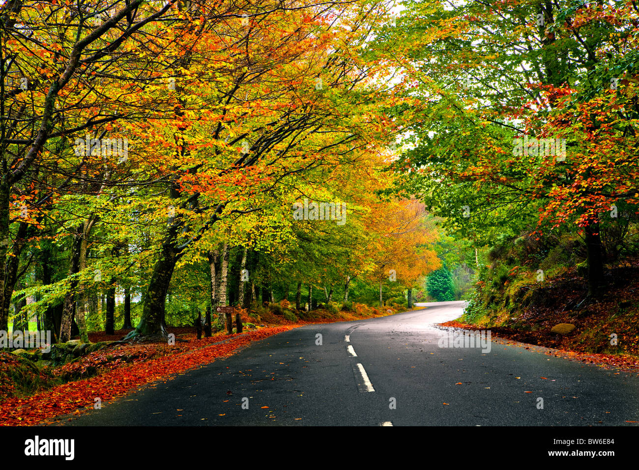 Autumn landscape with a beautiful road with colored trees Stock ...