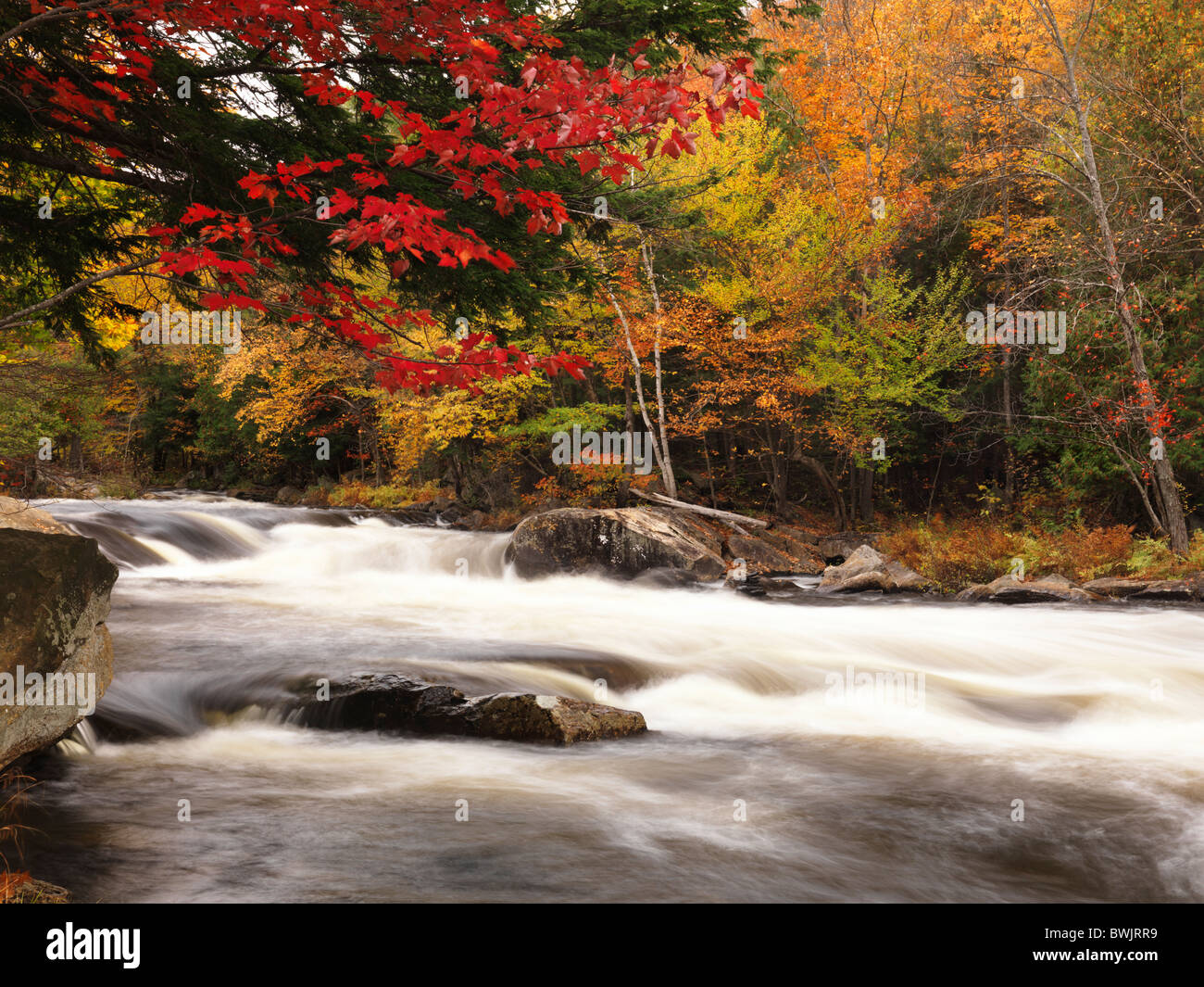 beautiful fall nature scenery of oxtongue river rapids. algonquin