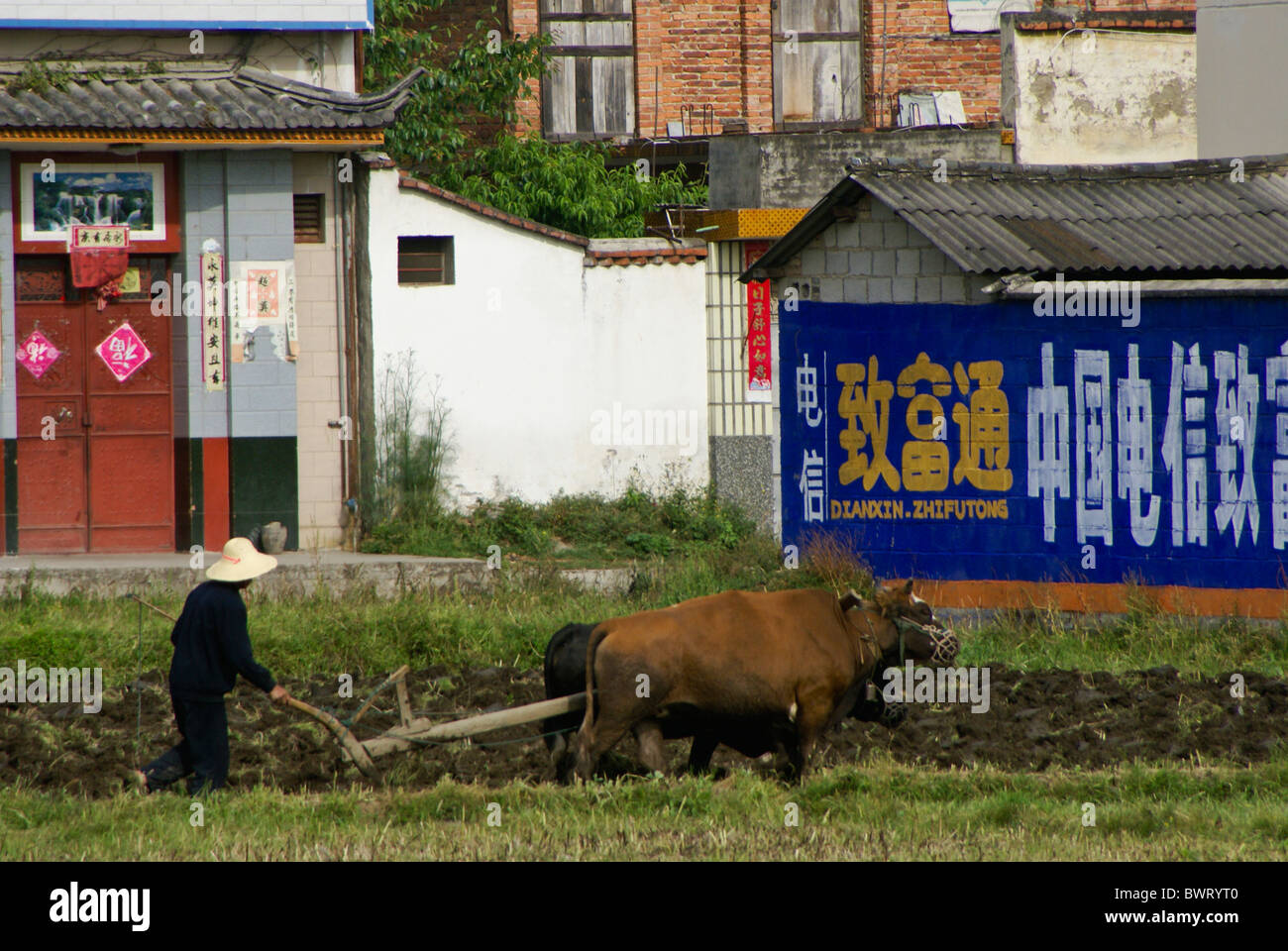 Farmer plowing field with cattle, Xizhou, Yunnan, China - Stock Image