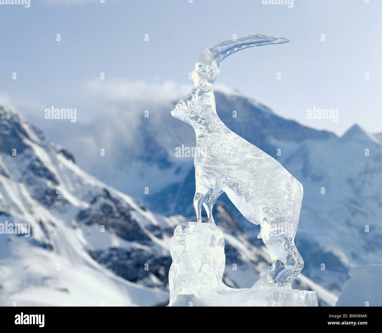 winter icicle sculpture Capricorn ibex Switzerland Europe Bern Mannlichen mountain panorama - Stock Image
