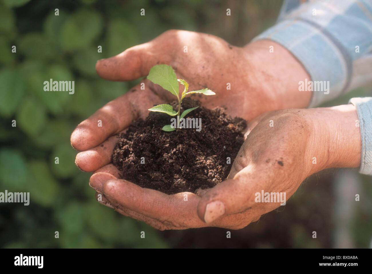 cultivation cultivating tree botany earth hand hands seedling Keimling plants Setzling sprig offspring - Stock Image