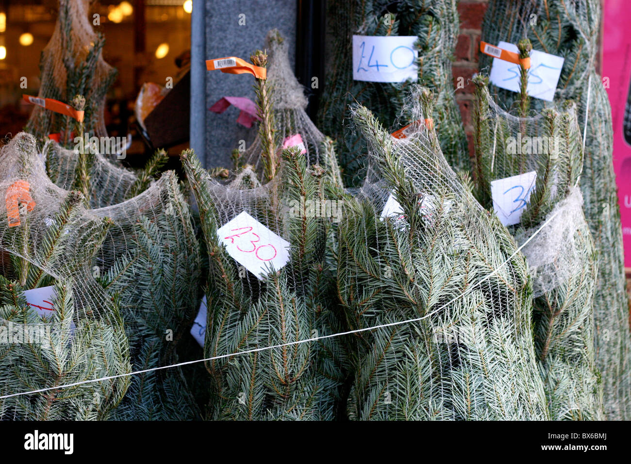 Christmas trees to orderStock Photo