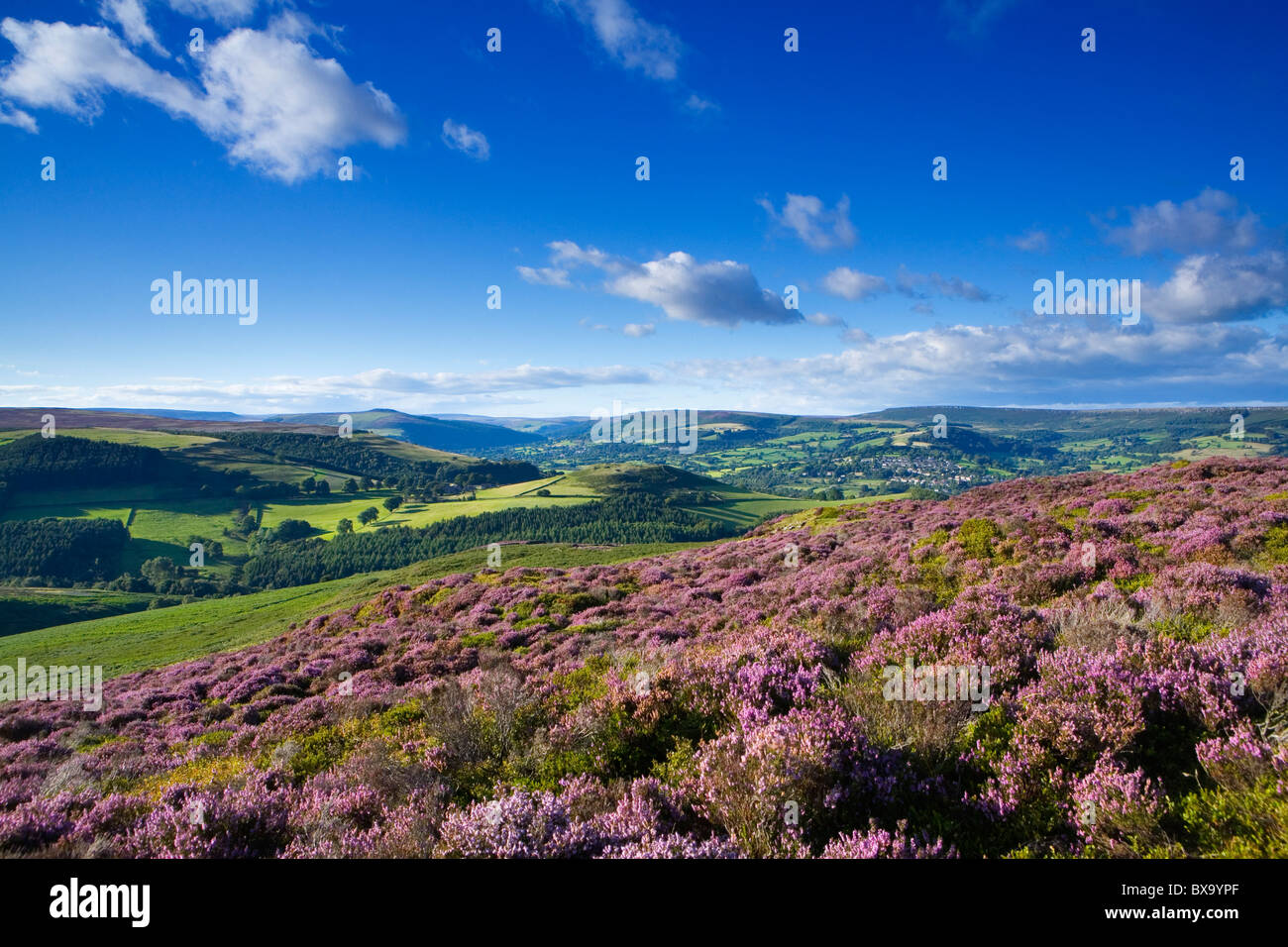 Heather on Eyam Moor with Castleton and the Hope Valley in the background - Stock Image