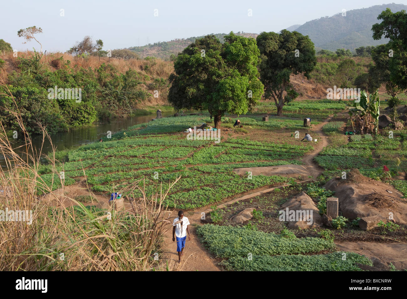 Fertile farmland lies in the town of Hastings in Sierra Leone, West Africa. - Stock Image
