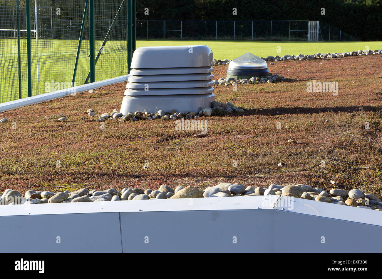 an environmentally friendly growing roof at a school in cornwall, uk - Stock Image