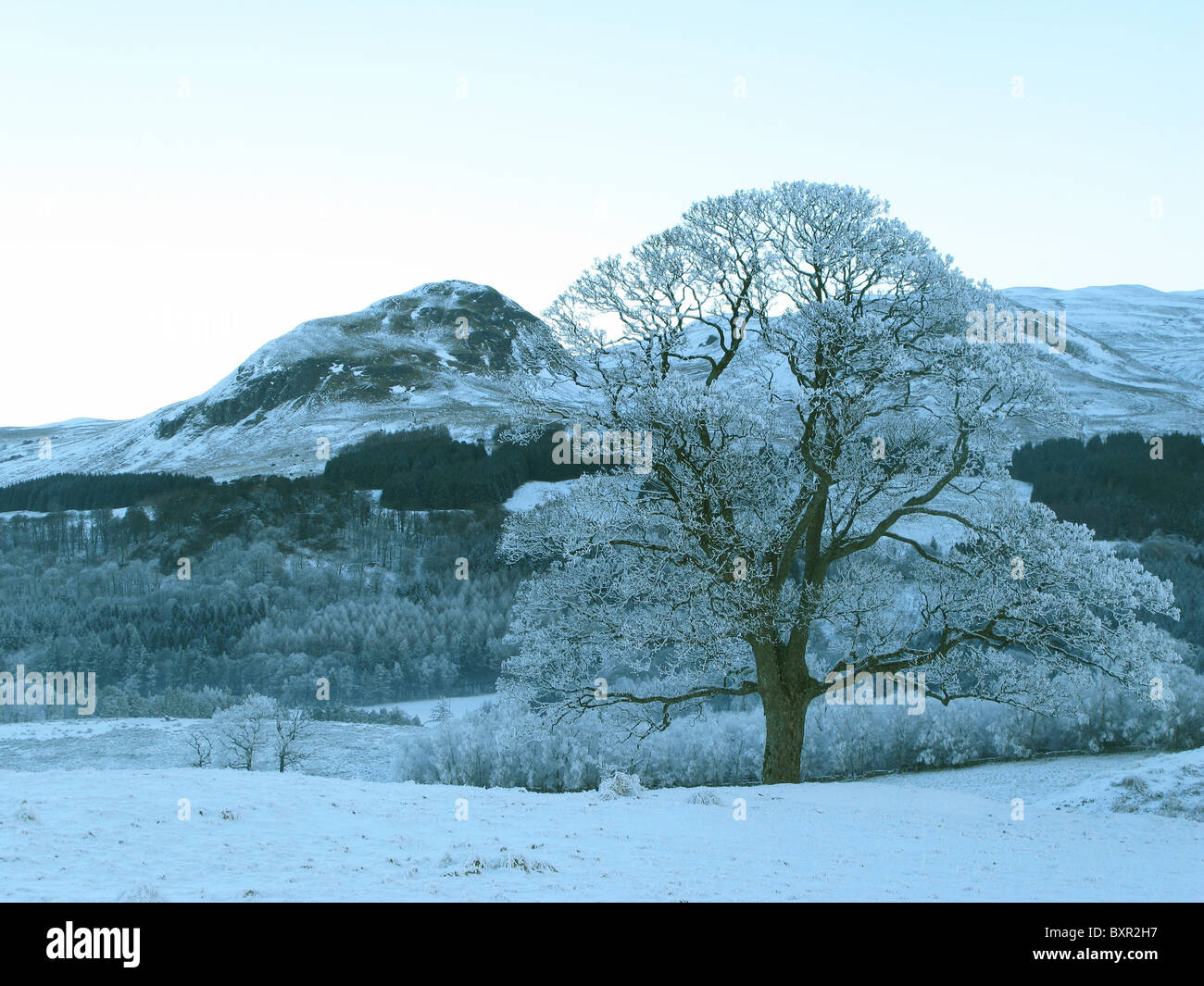 Frosted tree Blane Valley Stirlingshire Scotland - Stock Image