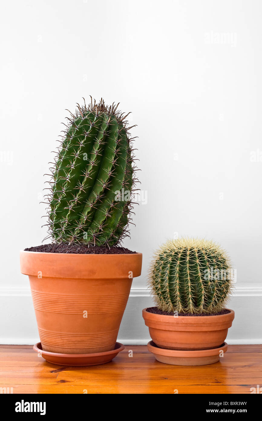 cactus ferocactus horridus stock photos cactus. Black Bedroom Furniture Sets. Home Design Ideas