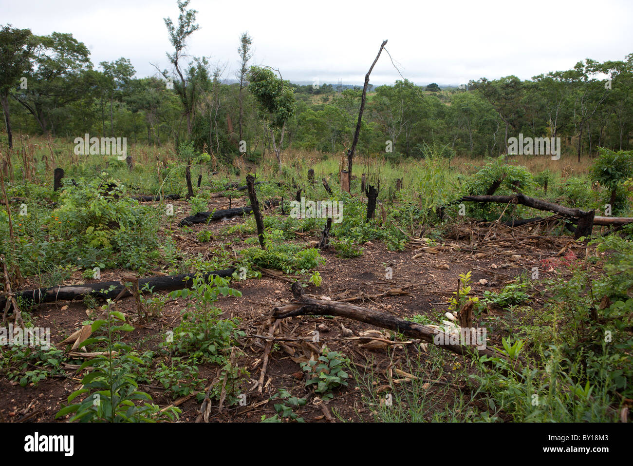 MECATI FOREST, MOZAMBIQUE, May 2010 : Expanding agriculture - this family cut the trees and cleared the land on - Stock Image