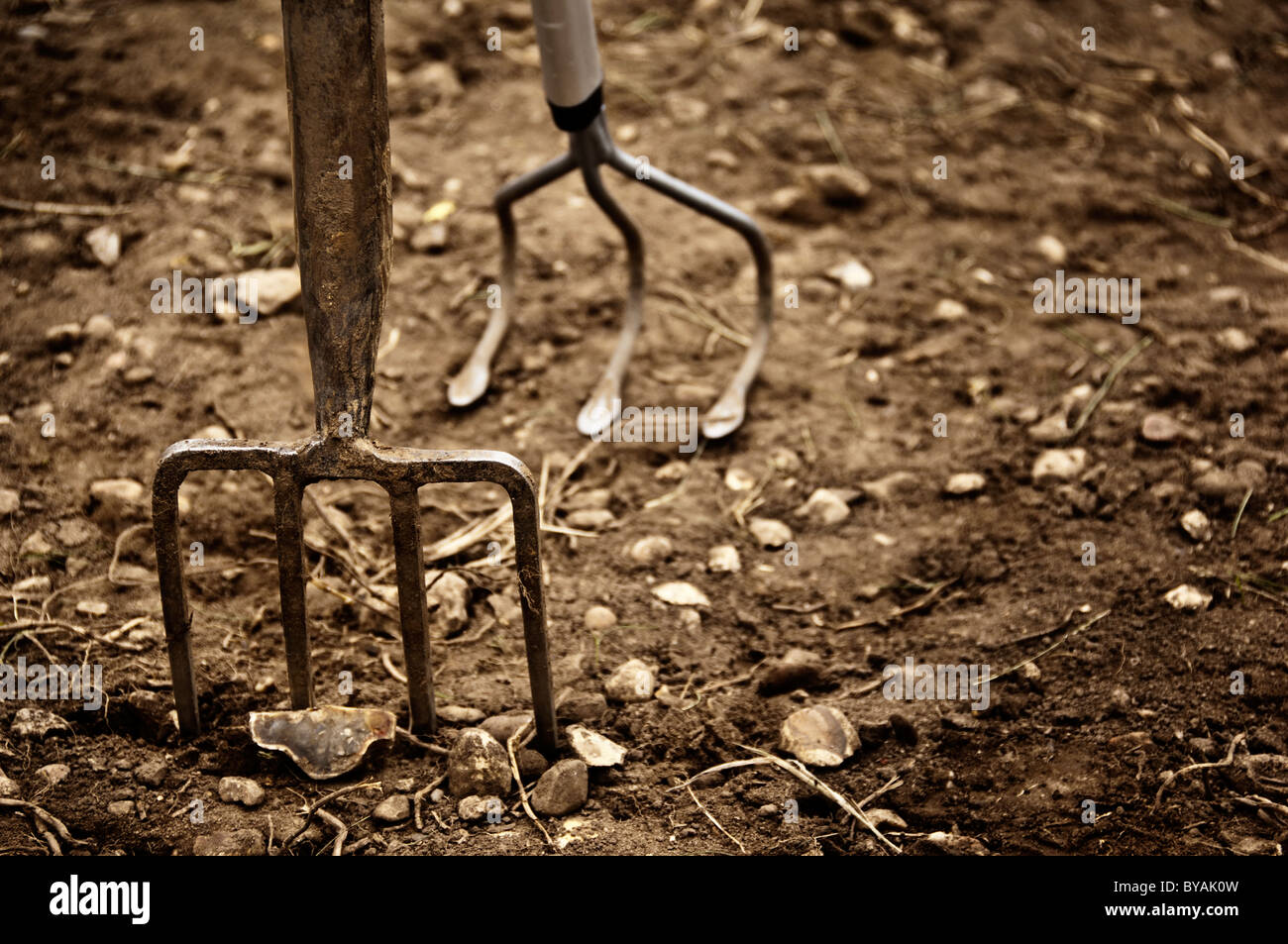 Garden fork and hoe - Stock Image