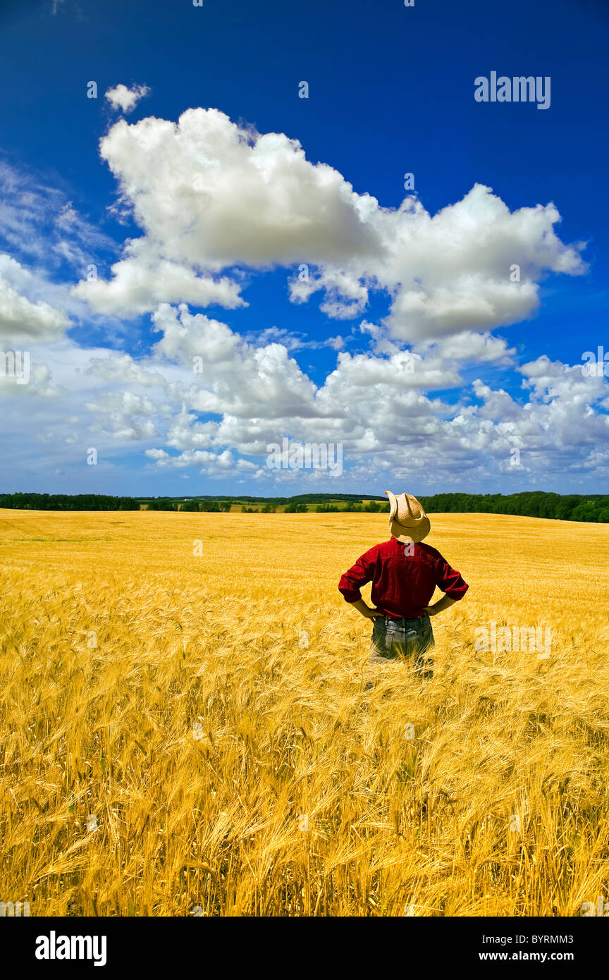 Agriculture - A farmer inspects his mature barley crop with Cumulus clouds overhead / Tiger Hills, Manitoba, Canada. - Stock Image