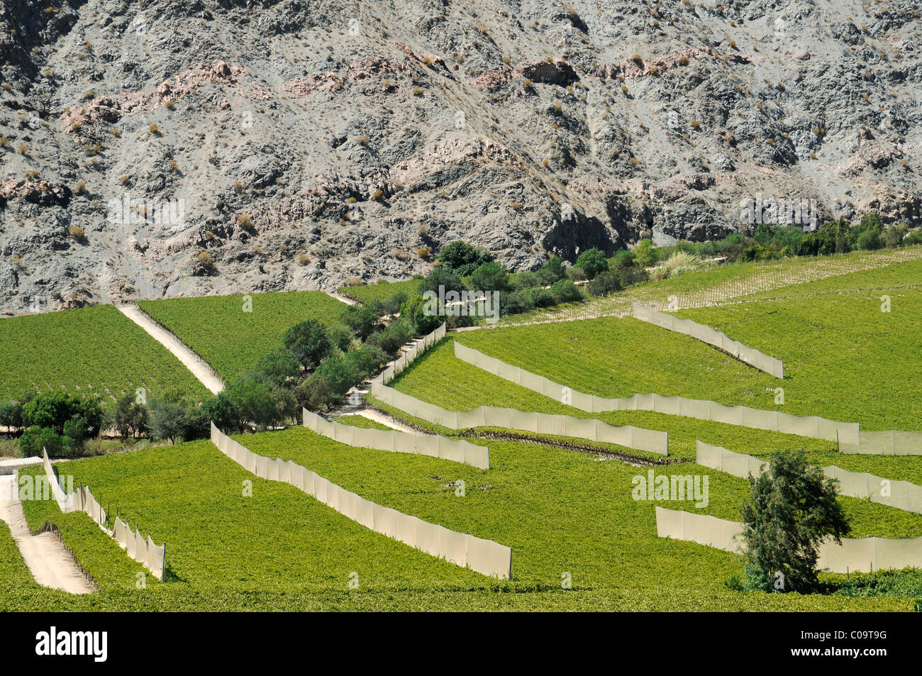 Vineyards, farming, fertile valley, desert mountains, Pisco Elqui, village, Vicuna, Valle d'Elqui, Elqui Valley, - Stock Image