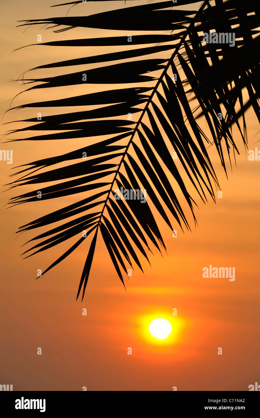 Sunset behind a palm tree, Doha, Qatar, Persian Gulf, Middle East, Asia - Stock Image
