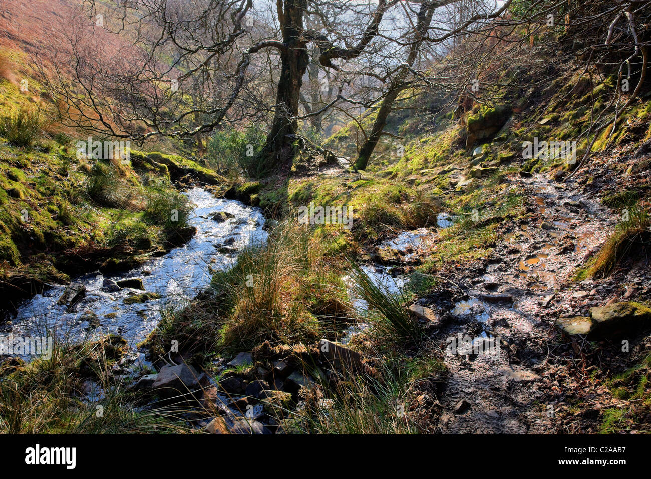 Mountain stream in Lady Clough flowing down from Kinder Scout to the river Noe in Edale Derbyshire - Stock Image