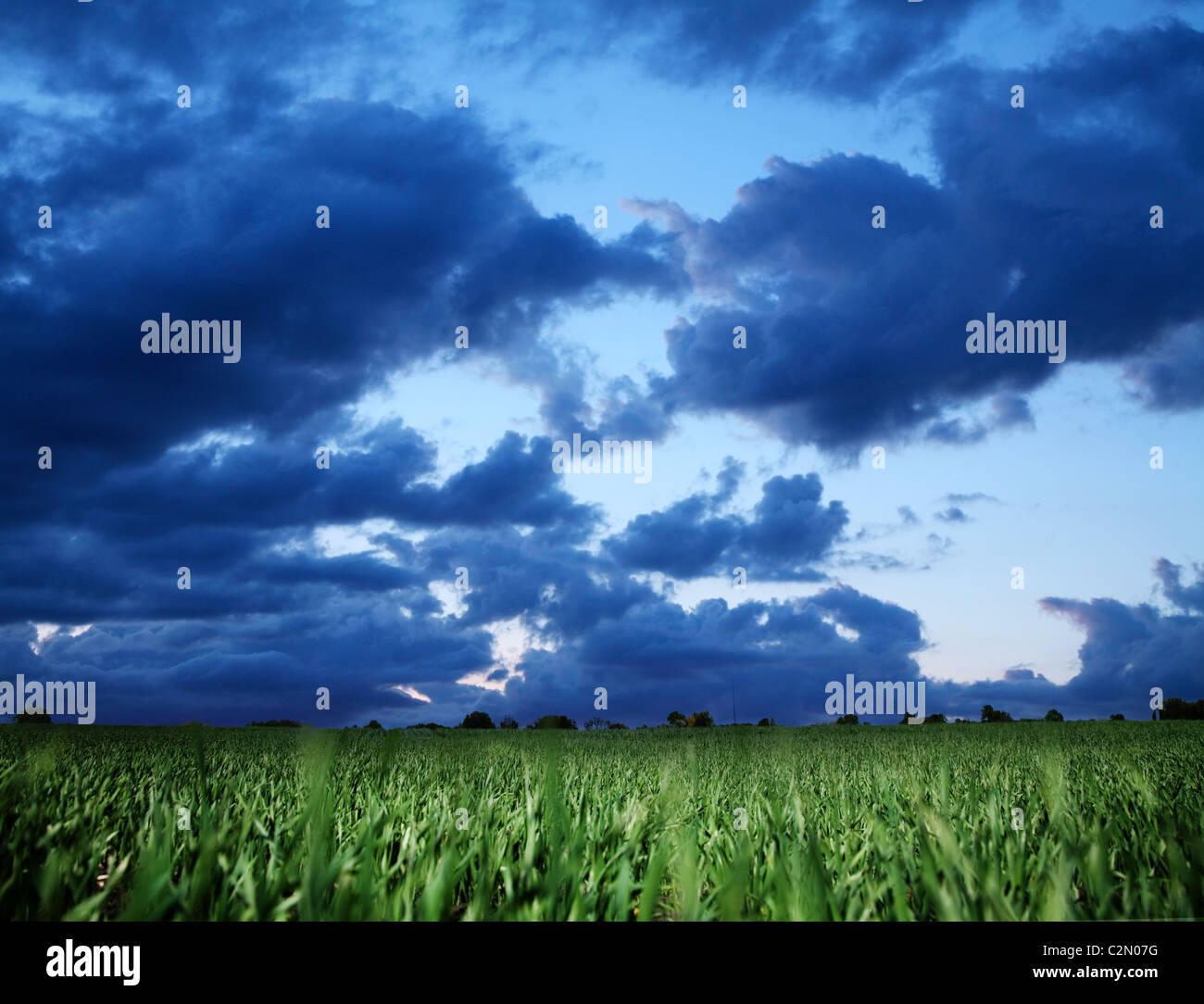 Wheat field and dark blue stormy sky. - Stock Image