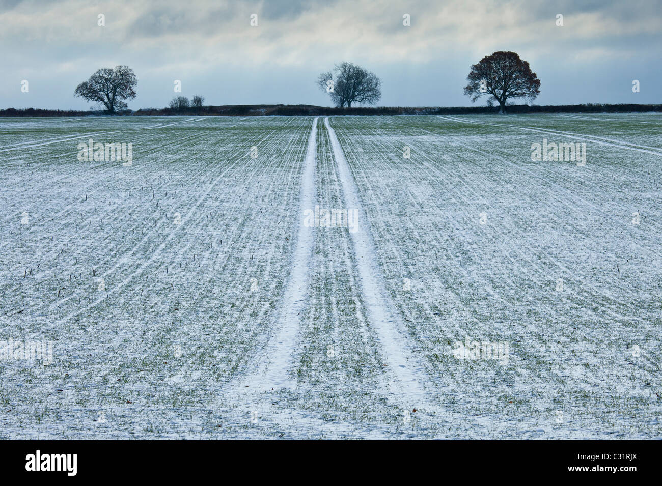 Frosty scene field and trees during hoar frost in winter, The Cotswolds, UK - Stock Image