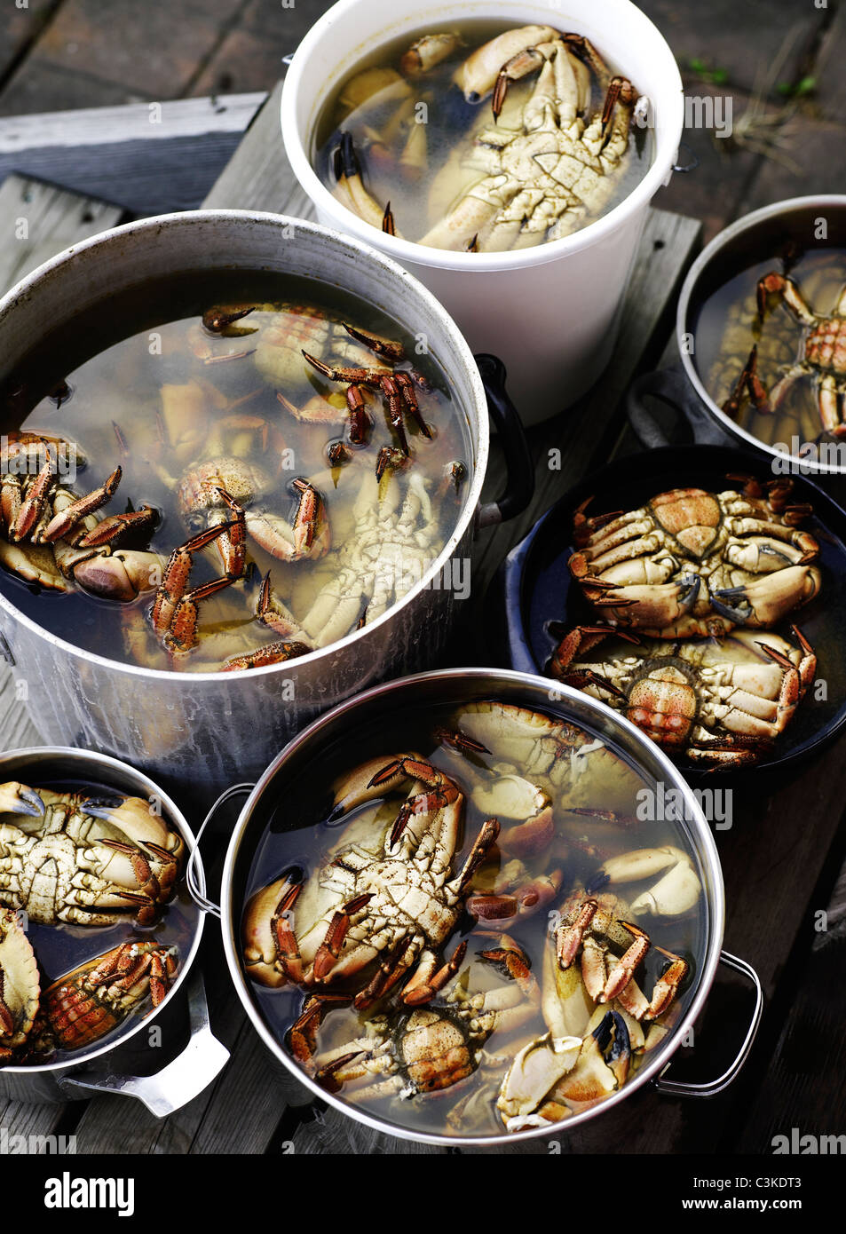 Crabs in saucepan - Stock Image