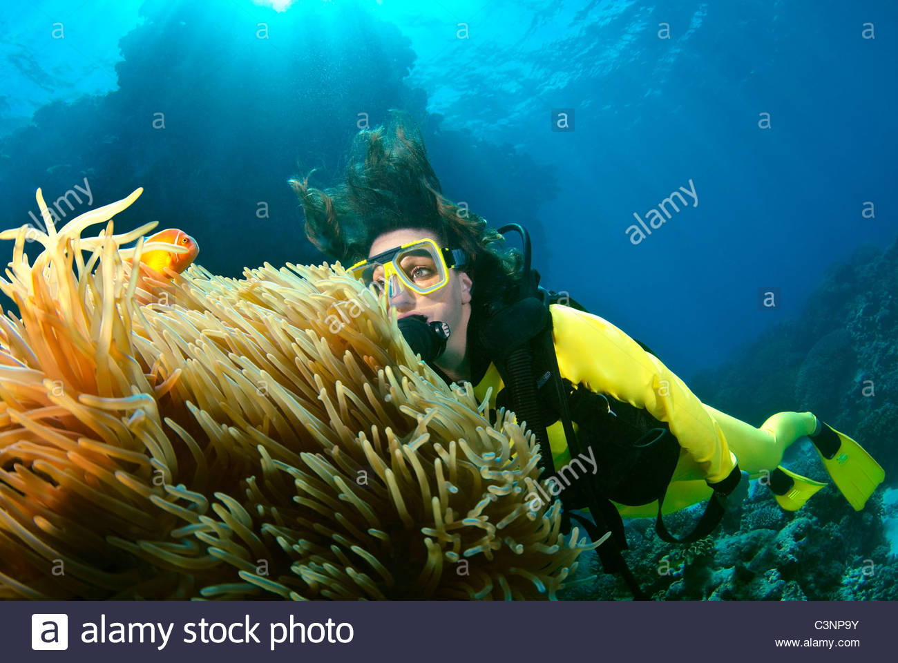 Woman scuba diving on The Great Barrier Reef Australia - Stock Image