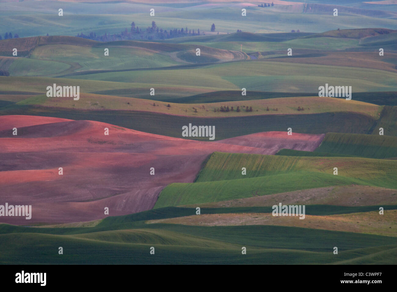 Palouse Fields Viewed From Steptoe Butte, Eastern Washington - Stock Image