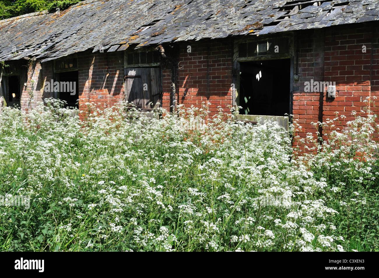 Derelict farm stables - Stock Image