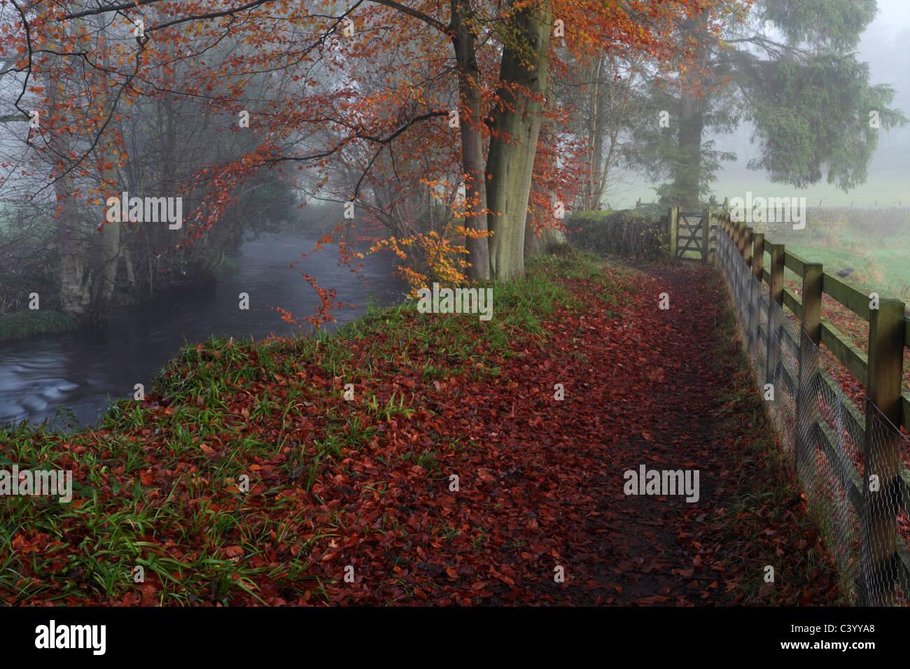 Misty autumn morning walking along the River Washburn near Blubberhouses in Yorkshire, England - Stock Image