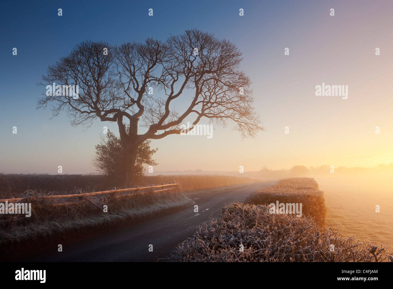 Tree and country lane on a misty morning at sunrise, Chawleigh, Devon, England. Winter (December) 2010. - Stock Image