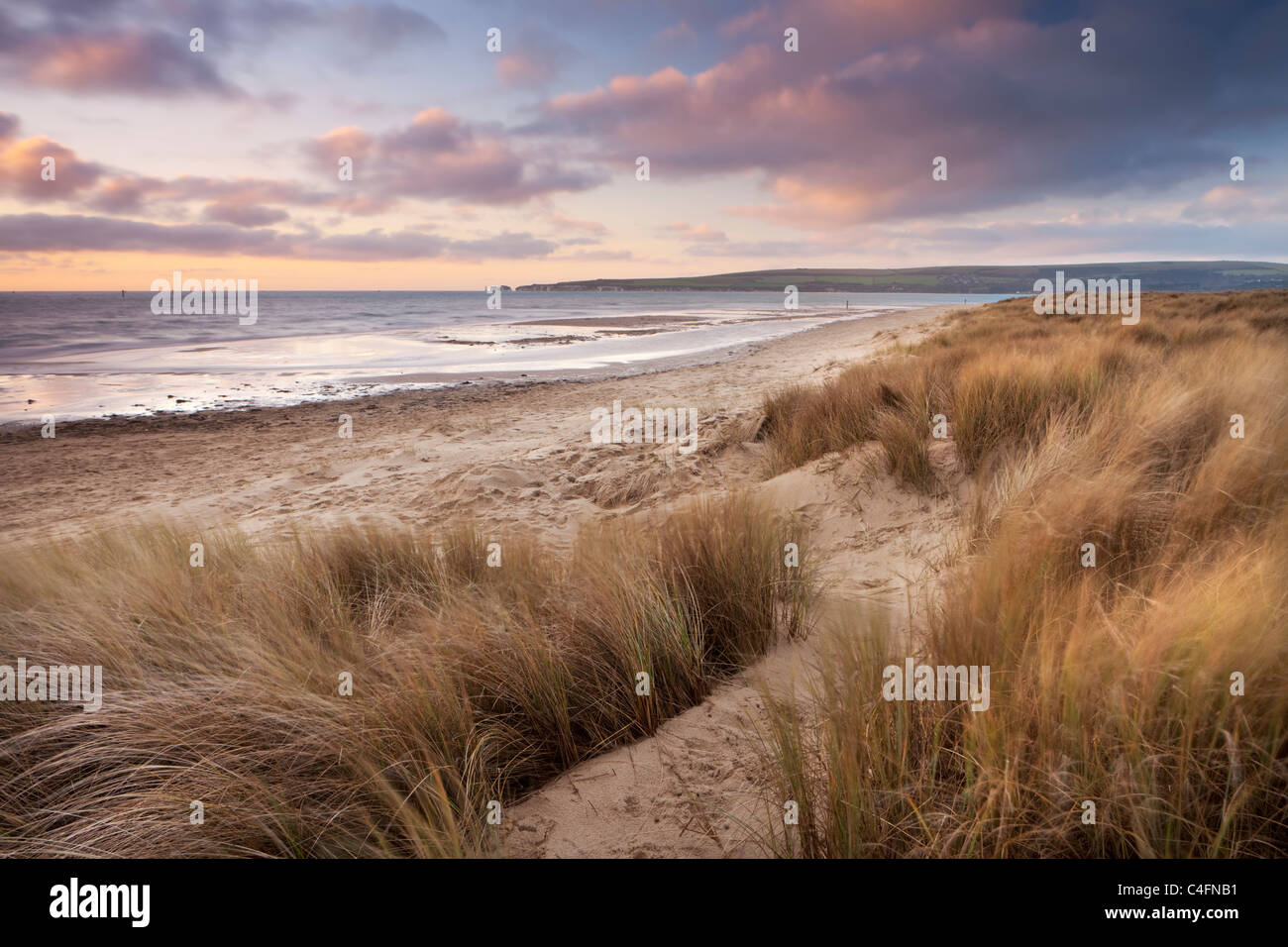 Windswept sand dunes on the beach at Studland Bay, Dorset, England. Winter (February) 2011. - Stock Image
