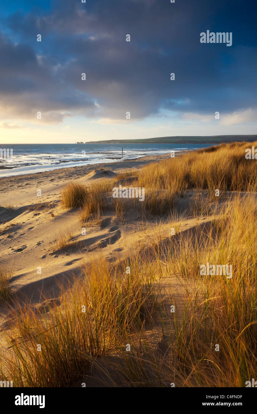 Studland Beach with views to Old Harry Rocks, Dorset, England. Winter (February) 2011. - Stock Image