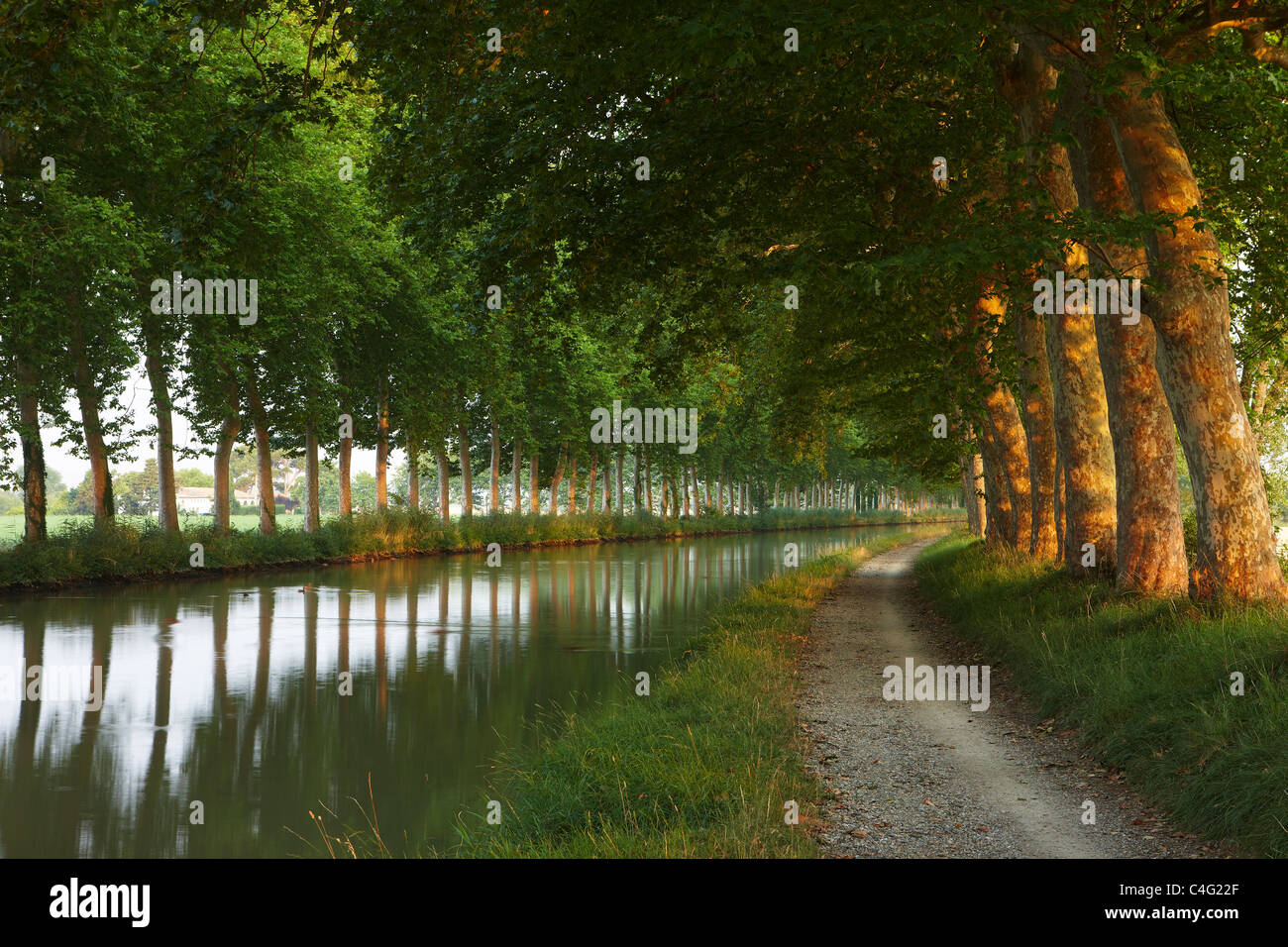 the Canal du Midi at dawn near Castelnaudary, Aude, Languedoc-Roussillon, France - Stock Image