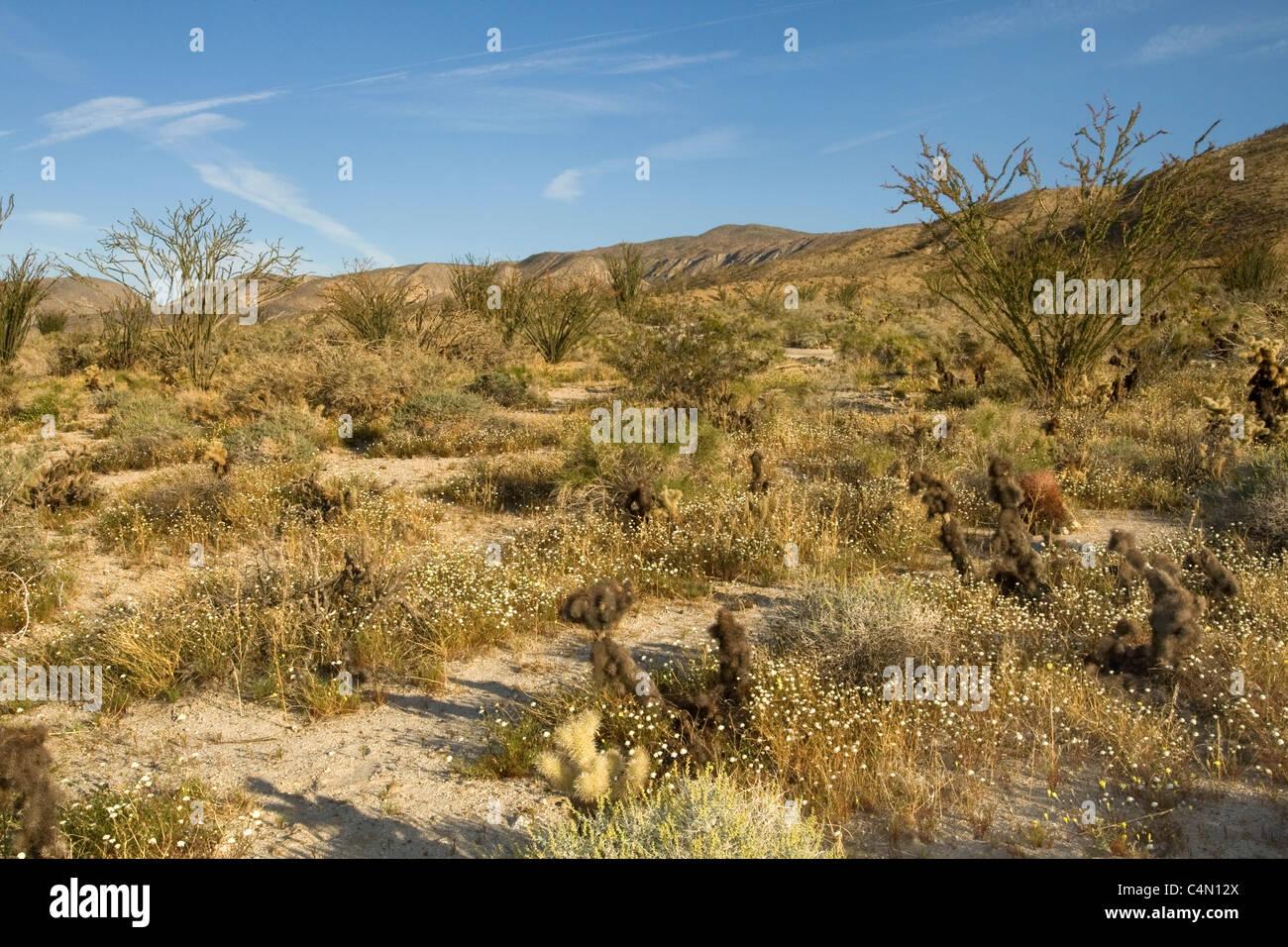 Anza Borrego Desert State Park, California. - Stock Image