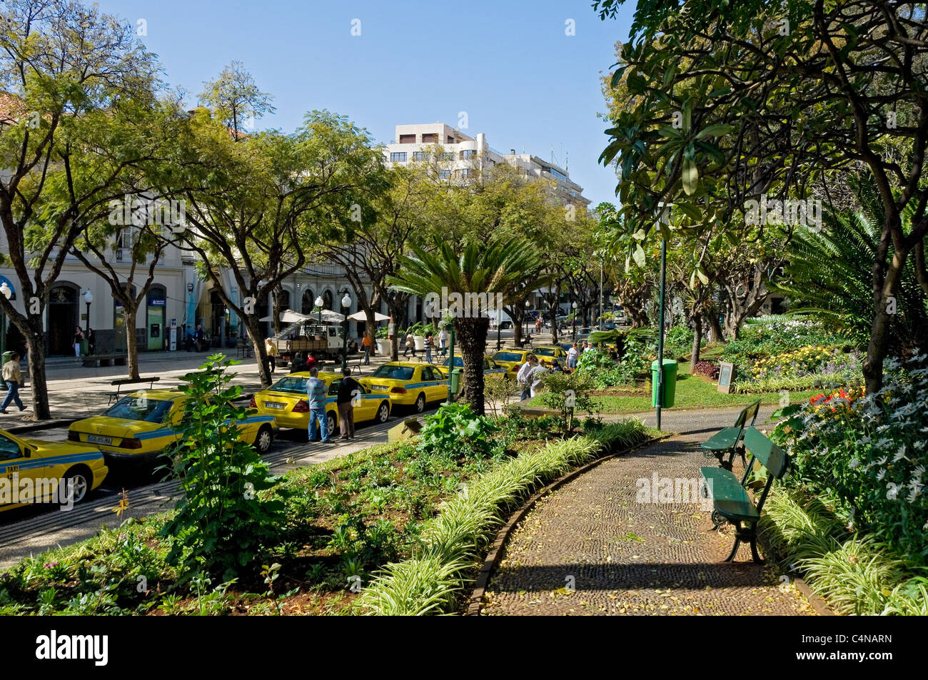 Jardim Municipal Gardens Funchal Madeira Portugal EU Europe   Stock Image