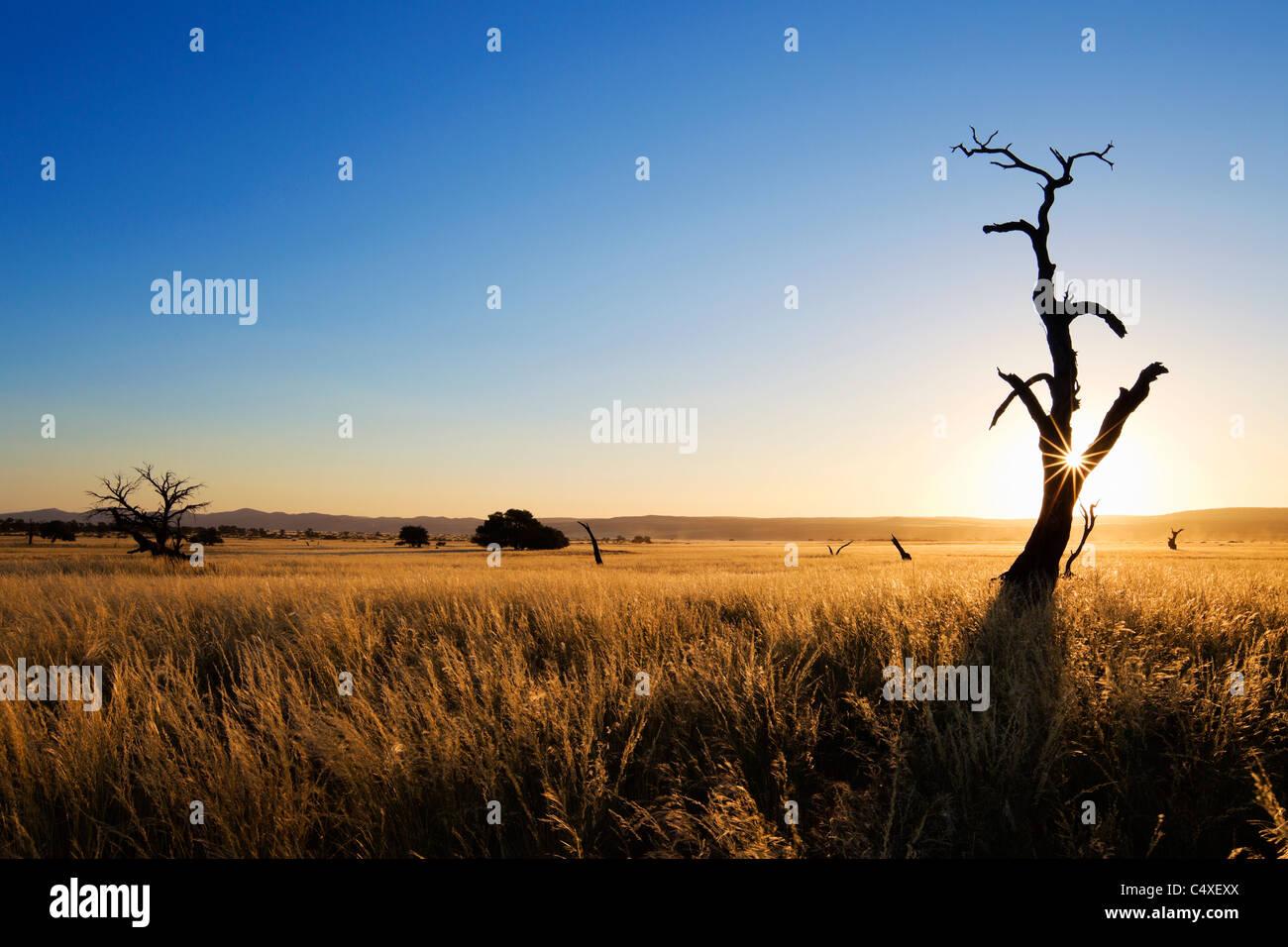 Scenery showing the unique ecology of the south-west Namib desert or pro -Namib. NamibRand Nature Reserve, Namibia - Stock Image