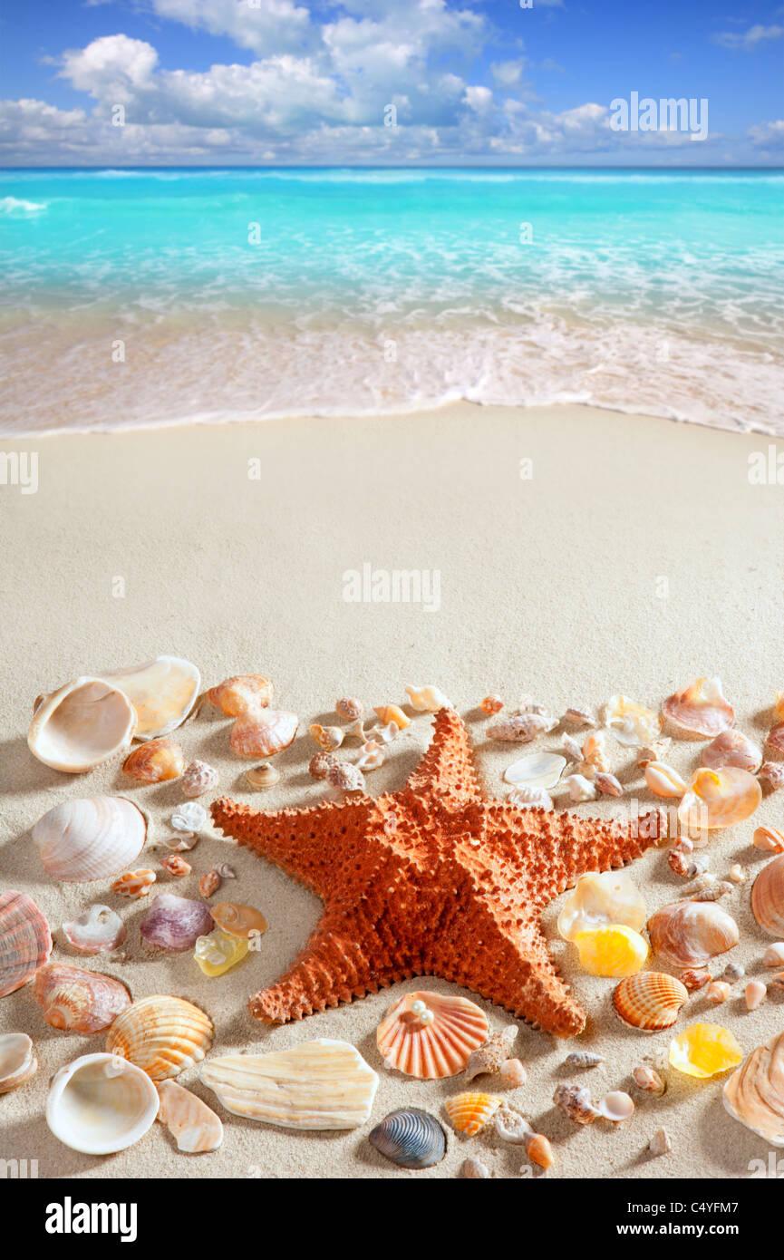 e46d6f1cbfcda beach sand starfish caribbean tropical sea summer vacation background