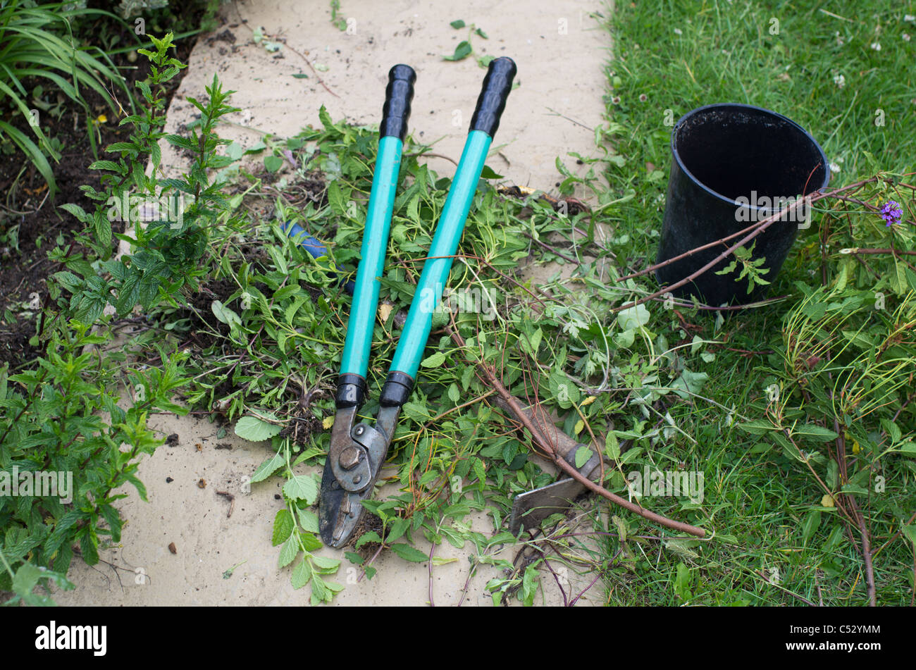 garden clippers croppers and clippings - Stock Image