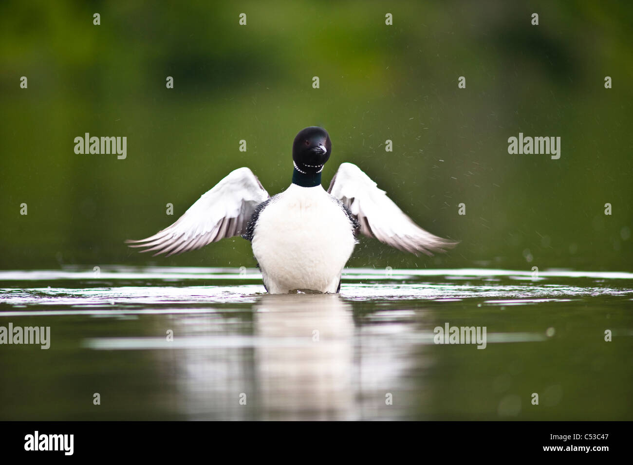 Flapping Wings Stock Photos & Flapping Wings Stock Images - Alamy
