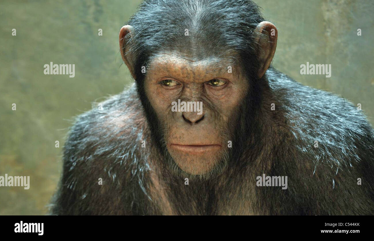 RISE OF THE PLANET OF THE APES   2011 TCF/Chernin Entertainment  film with Andy Serkis as Caesar - Stock Image