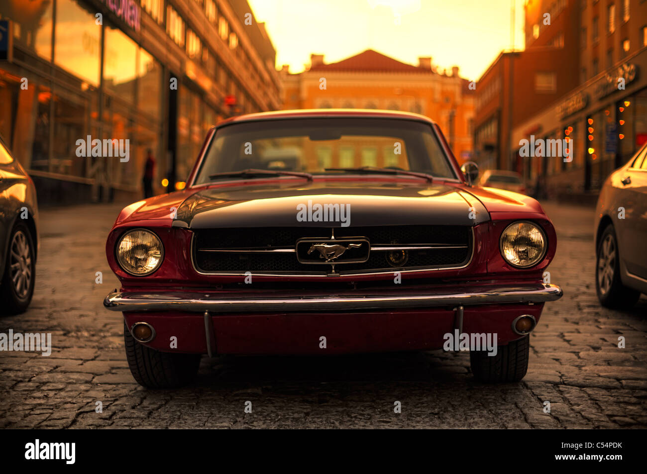 A Mustang - Stock Image